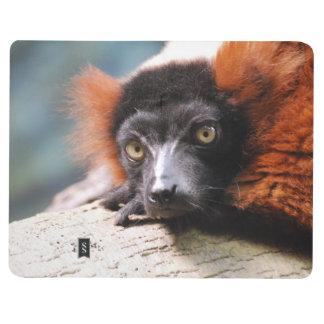 Resting Red Ruffed Lemur Journal