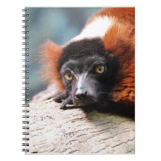 Resting Red Ruffed Lemur Notebook
