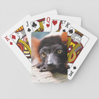 Resting Red Ruffed Lemur Poker Deck