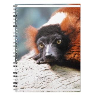 Resting Red Ruffed Lemur Spiral Notebook
