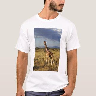 Reticulated Giraffe, Giraffe camelopardalis 2 T-Shirt