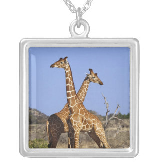 Reticulated Giraffes, Giraffe camelopardalis 3 Silver Plated Necklace