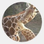 reticulated giraffes round sticker