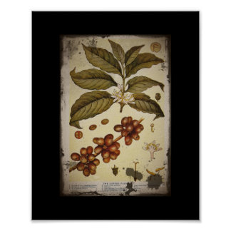 Retro Botanical Image Coffee Poster