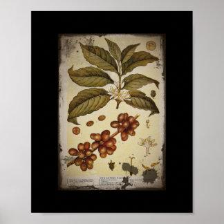 Rétro café botanique d'image poster