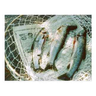 Retro Fishing Net and Trout Postcard