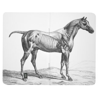 Retro horse muscle anatomy picture journal