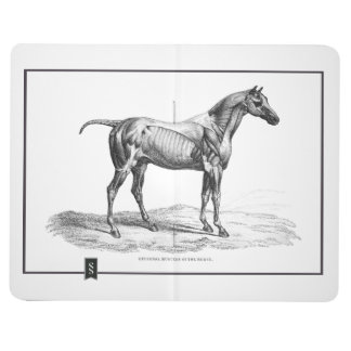 Retro horse muscle anatomy picture journals