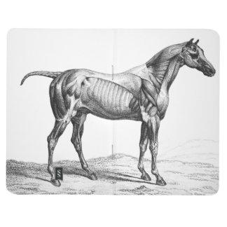 Rétro image d'anatomie de muscle de cheval calepin