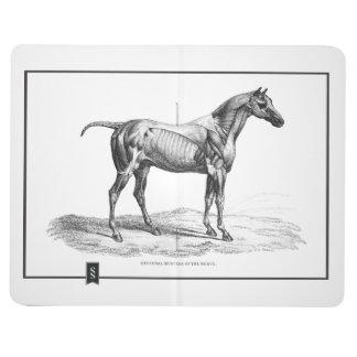 Rétro image d'anatomie de muscle de cheval carnets