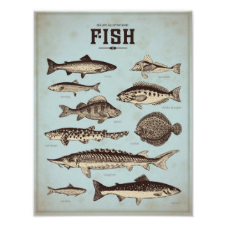 Retro marine poster with different sorts of fish