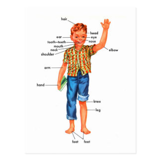 Retro Vintage Kitsch Parts of a Boy Postcard