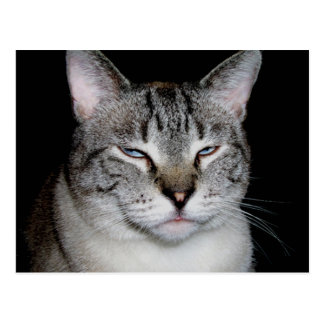 """Revenge Is Sweet"" Cat Postcard"