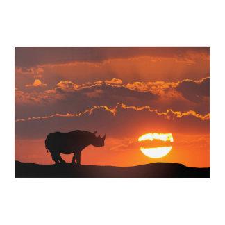 Rhino at sunset, Masai Mara, Kenya Acrylic Print