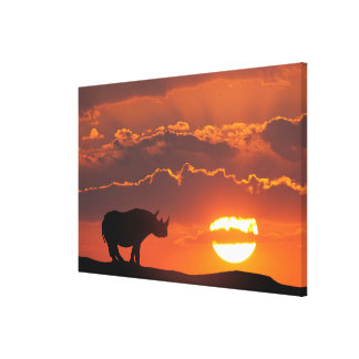 Rhino at sunset, Masai Mara, Kenya Canvas Print