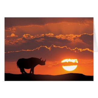 Rhino at sunset, Masai Mara, Kenya Card