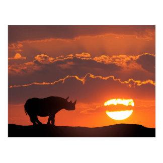 Rhino at sunset, Masai Mara, Kenya Postcard