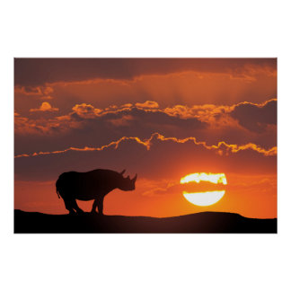 Rhino at sunset, Masai Mara, Kenya Poster