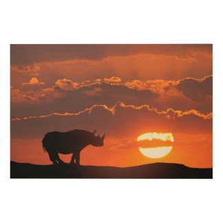 Rhino at sunset, Masai Mara, Kenya Wood Wall Art