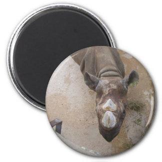 Rhino at the San Antonio Zoo 2 Inch Round Magnet