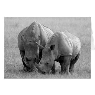 Rhino Card black & white