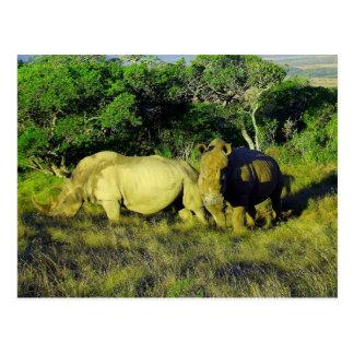 rhino couple postcard