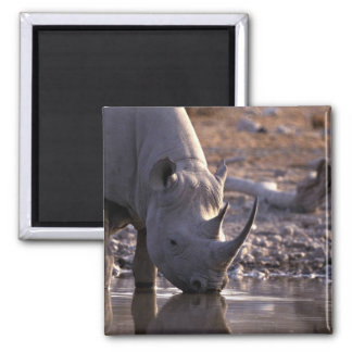 Rhino drinking at a watering place square magnet