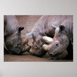 Rhino Group Poster