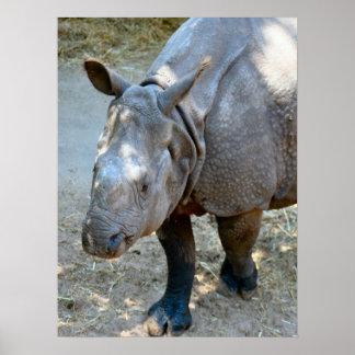 Rhino Photo Poster