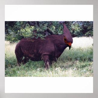 Rhinobird poster