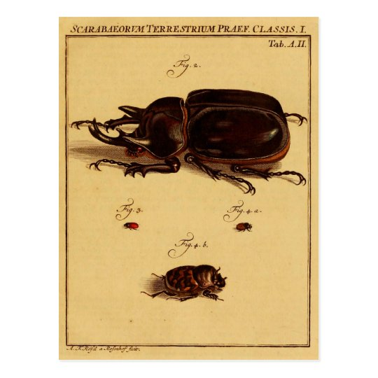 Rhinoceros Beetles Postcard