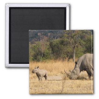 Rhinoceros Family Square Magnte Magnet