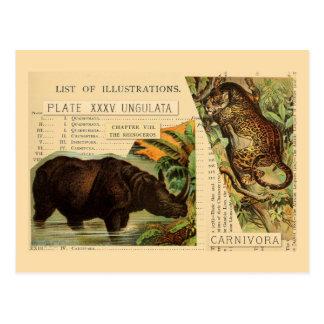 Rhinoceros Jaguar Animal Illustrations Postcard