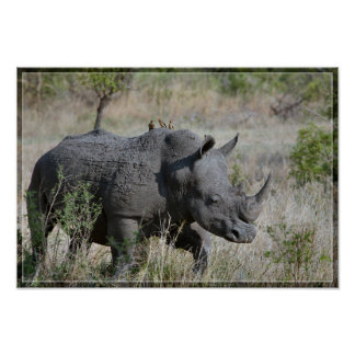 Rhinoceros with Birds Poster