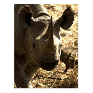 Rhino's head postcard