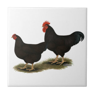 Rhode Island Red Bantams Tile