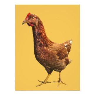 Rhode Island Red Hen Chicken Photo Print
