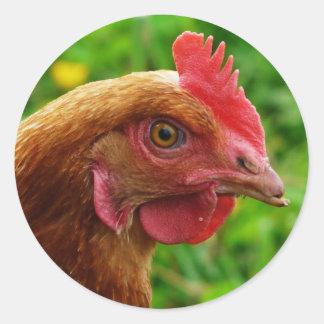 Rhode Island Red Hen Classic Round Sticker