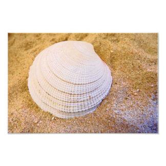 Rhode island state shell Quahog print Photo Art