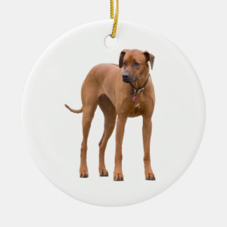 Rhodesian Ridgeback dog beautiful photo, gift Ceramic Ornament
