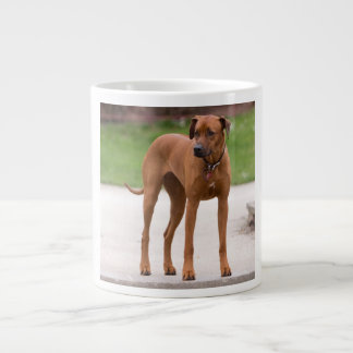 Rhodesian Ridgeback dog beautiful photo, gift Giant Coffee Mug