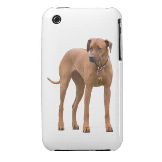 Rhodesian Ridgeback dog beautiful photo, gift iPhone 3 Case-Mate Case