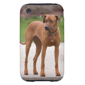 Rhodesian Ridgeback dog beautiful photo, gift Tough iPhone 3 Cover