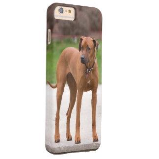 Rhodesian Ridgeback dog beautiful photo portrait Barely There iPhone 6 Plus Case