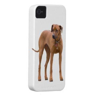 Rhodesian Ridgeback dog beautiful photo portrait iPhone 4 Cover