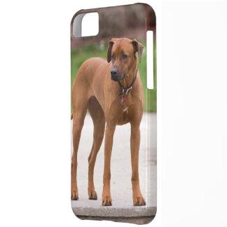 Rhodesian Ridgeback dog beautiful photo portrait iPhone 5C Case