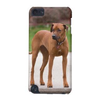 Rhodesian Ridgeback dog beautiful photo portrait iPod Touch 5G Case