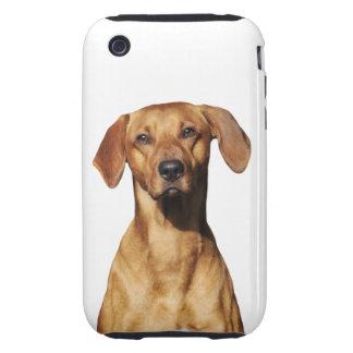 Rhodesian Ridgeback dog beautiful photo portrait Tough iPhone 3 Covers