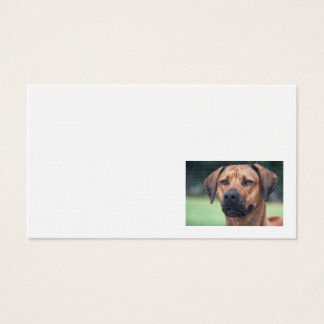 Rhodesian Ridgeback Linen business card