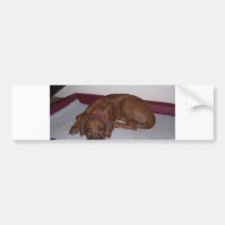 Rhodesian_Ridgeback_puppy Bumper Sticker